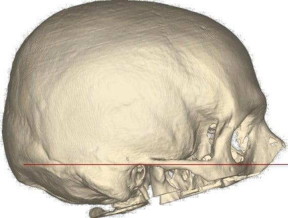 Imagen que contiene interior, sombrero, gato, puesto  Descripción generada automáticamente